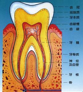 维护口腔健康的黄金准则 补牙疼不疼看牙齿龋坏程度 智慧牙:大多是